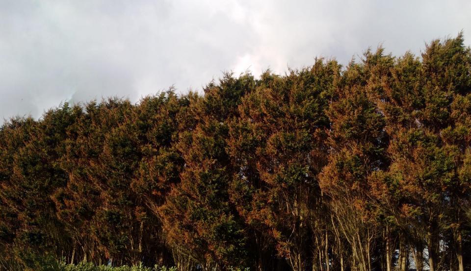 image from Drzewa po sztormie